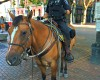 Public Safety Survey & Street Civility in Pioneer Square